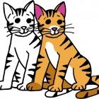 Come si disegna un gatto