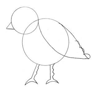 disegnare-uccello_3 sm
