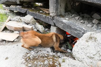 chien recherche de victime