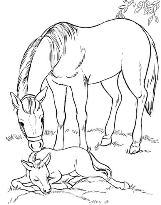 Disegno di cavalla e puledro da colorare cose per crescere for Disegno cavallo per bambini