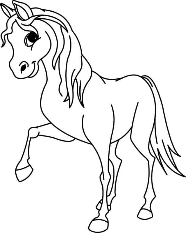 cavallo grazioso