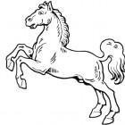 Disegno di cavallo impennato