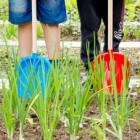 Studenti in punizione al lavoro nell'orto