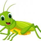 Senza insetti vita a rischio
