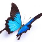 I colori delle farfalle: scoperto il perché