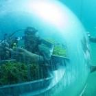 L'orto di Nemo