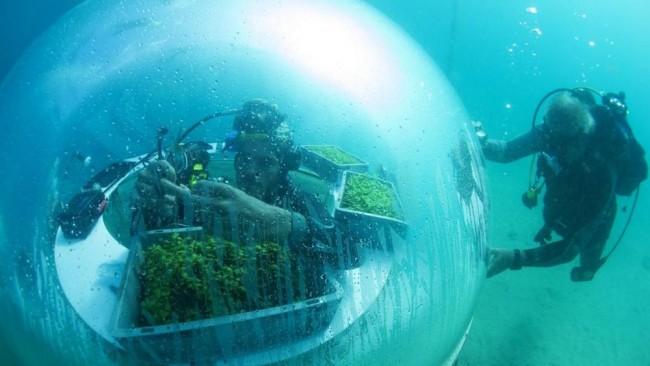 orto sottomarino.jpgF-1024x576@LaStampa.it