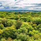 Dal Portogallo alla Russia un'unica foresta