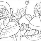 La Rosa di Alice nel Paese delle Meraviglie da colorare