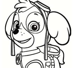 Disegno Di Zuma Cucciolo Dei Paw Patrol Da Stampare E Colorare
