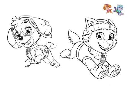 Disegno Di Skye E Everest Cucciole Di Paw Patrol Da Stampare E Colorare
