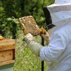 Lo smog lo misura il miele