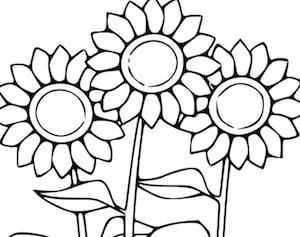 Girasoli Da Colorare Disegno Di Fiori Per Bambini Da Stampare Gratis