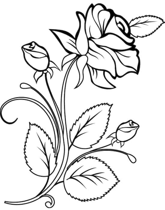 Rose da colorare for Fiori da colorare e stampare