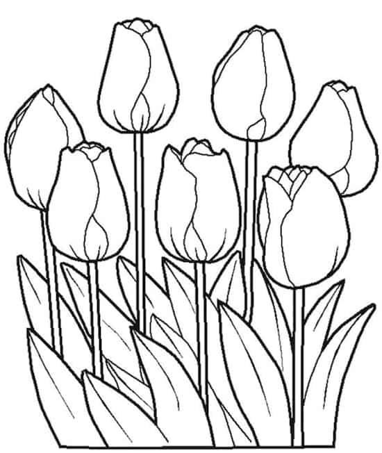 Tulipani Da Colorare Disegni Di Fiori Per Bambini Da Stampare Gratis
