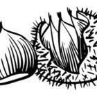 Disegno di castagne