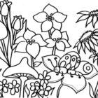 Fiori, farfalla e fungo da colorare