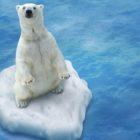 Animali da salvare: l'allarme estinzione continua