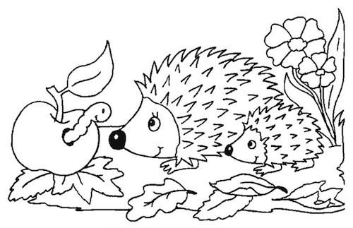 Disegno Di Riccio Da Stampare Gratis E Da Colorare Per Bambini
