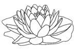 Disegno di fiore di loto