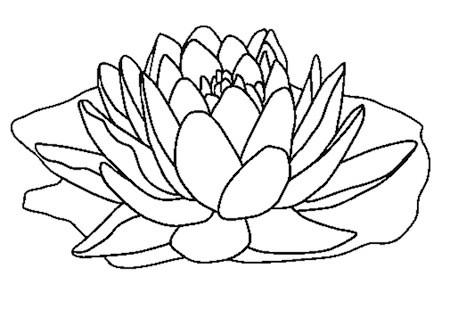 Disegno di fiore di loto for Fiori grandi da colorare