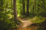 Foreste promosse e diplomate