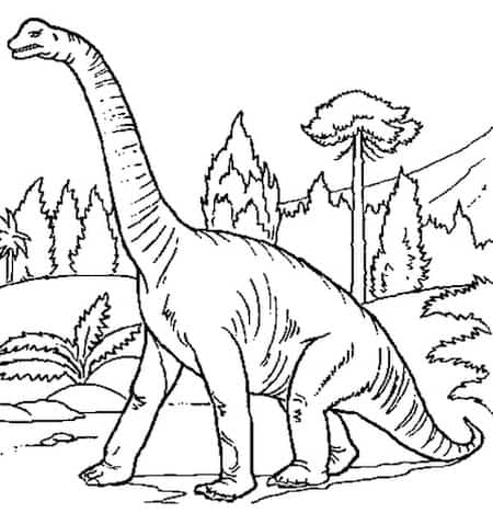Disegno Di Dinosauro Da Stampare Gratis E Colorare Il Brontosauro