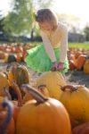 Come scegliere la zucca da intagliare per Halloween