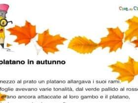 Il platano in autunno dettato per la scuola primaria